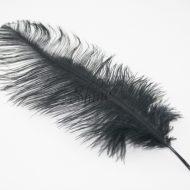Blondine Feather Black