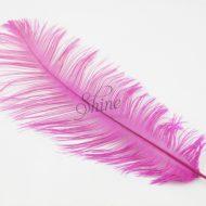 Blondine Feather Cyclamen