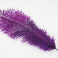 Blondine Feather Prune