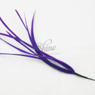 Biots Purple