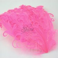 Curly Hackle Pad Rose