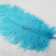 Ostrich Plume Peacock
