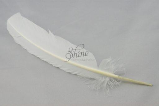Single Feather White