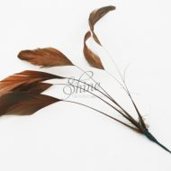 Stripped Feathers Chocolate Brown