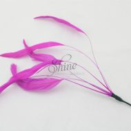 Stripped Feathers Fuchsia Pink