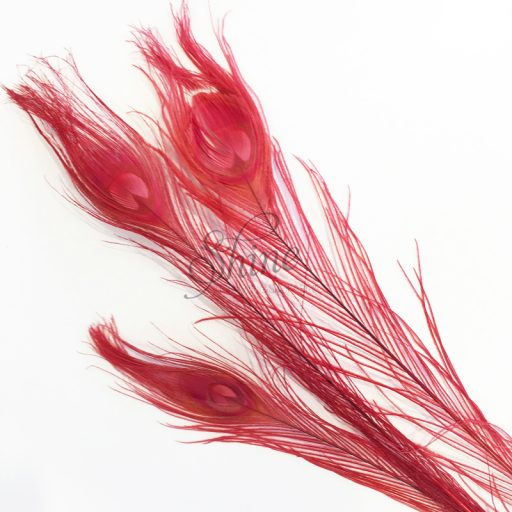 Dyed Peacock Eye Feather Large 65cm - Red