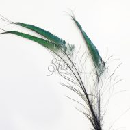 Peacock Sword Feather Large 70-80cm - Natural (Black Spine)
