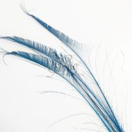 Peacock Sword Feather Large 70-80cm - Turquoise