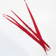 Ringneck Dyed Side Feather 55cm Red