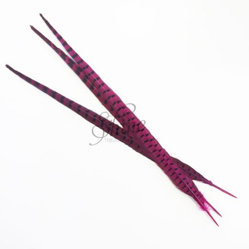 Ringneck Striped Pheasant Tail Feather Large 55cm Cerise